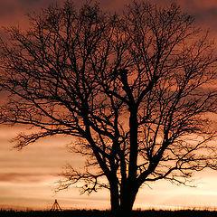 """фото """"... november sunset II"""""""