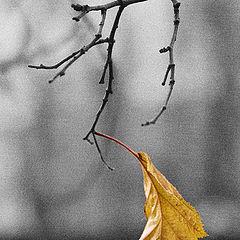 """фото """"leaf"""""""