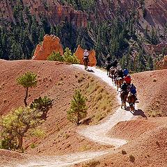 """фото """"Horse trail / 0059_01"""""""