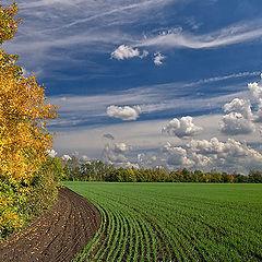 "фото ""Осенняя, с полем и облаками"""