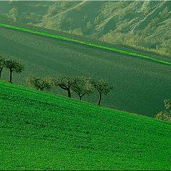"""фото """"green landscape"""""""