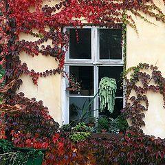 "фото ""30865 Fall window"""
