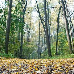 """фото """"Осенний марафон - 8"""""""