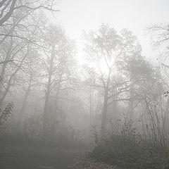 """фото """"Утро туманное..."""""""