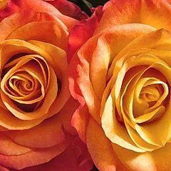 """фото """"2 Roses"""""""
