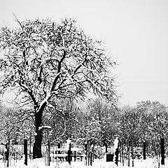 """photo """"Winter in my village"""""""