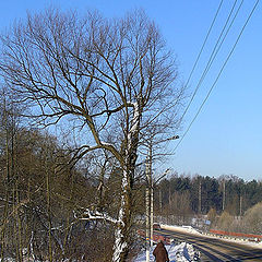 "photo ""Winter to Peredelkino."""