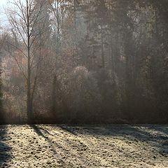 "photo ""Winter light"""