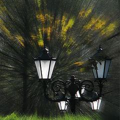 """фото """"фонарики"""""""