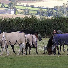 "photo ""Horses in a coat"""