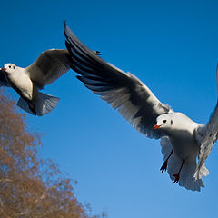 "photo ""The London's seagulls"""