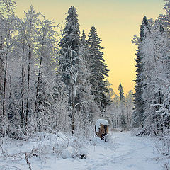"""фото """"Разноцветный зимний лес"""""""