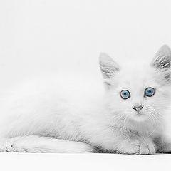 """фото """"cat"""""""