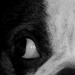 "фото ""Peter Eye"""