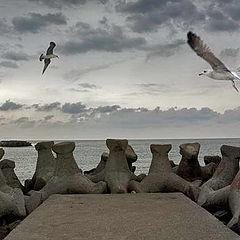 """фото """"Fly"""""""