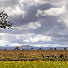 "photo ""African landscape with birds"""