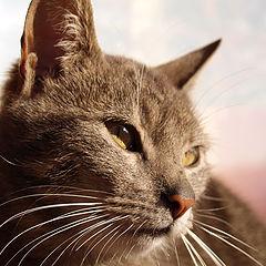 "фото ""Zakopane Cat"""