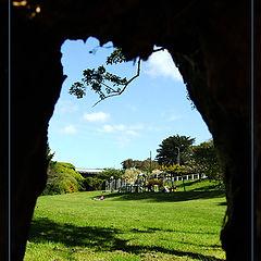 """photo """"Tree Hole"""""""