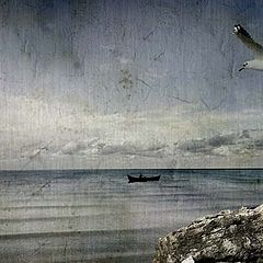"photo ""seagull dream"""