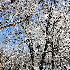 "фото ""Лесной ручей, мороз минус 25"""