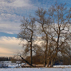"""photo """"Simple view with old trees."""""""