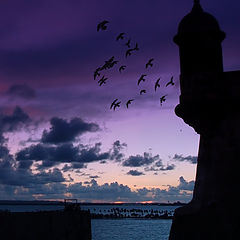 "photo ""puerto rico - birds sunrise"""