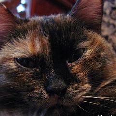 """photo """"kitty"""""""