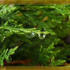 "photo ""Raindrops"""