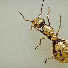 "photo ""the ant"""