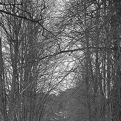 """фото """"Деревья всегда большие.."""""""