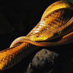 "фото ""Serpent"""