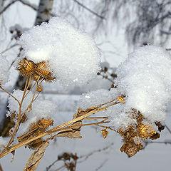 """фото """"Зимние наряды"""""""