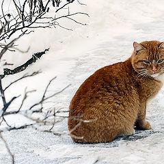 "photo ""the cat -)"""