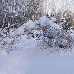 """фото """"Тяжесть зимы"""""""