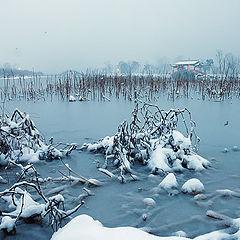 """фото """"Snowy lake"""""""
