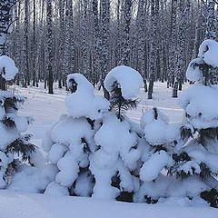 """фото """"В зимнем лесу"""""""