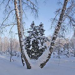 """фото """"Снежный февраль"""""""