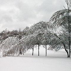 """photo """"Ice Storm"""""""