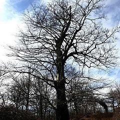 "фото ""a tree :D"""