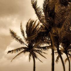 """фото """"иногда тайфун возвращается..."""""""