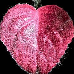 """фото """"сердце растений"""""""