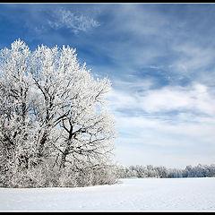 """фото """"Winter tree"""""""