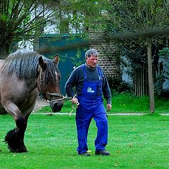 "photo ""Farmer with Belgian draft horse"""