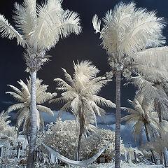 "photo ""Winter in Mexico"""
