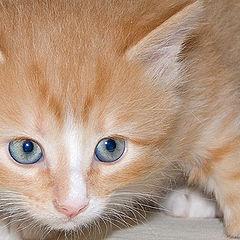 """фото """"Мой маленький Кот"""""""