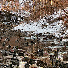 """photo """"The duck river"""""""