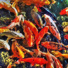 "photo ""Fishing tales"""