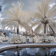 """photo """"White summer"""""""