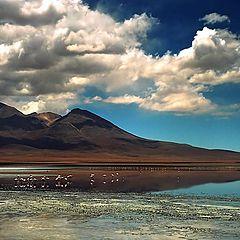 """фото """"Wild Bolivia"""""""