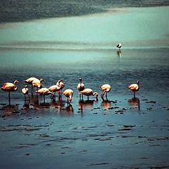 """фото """"Flamingo's"""""""